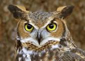 Owl Lady's Avatar