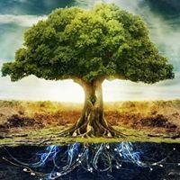 MatthewWhitson's Avatar